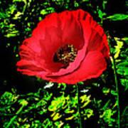 The Poppy Poster