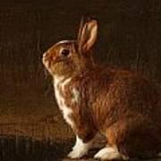The Rabbit Poster