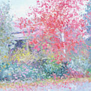 The Red Japanese Maple Tree Poster