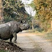 The Rhino At Kaziranga Poster