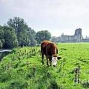 The River Suir County Tipperary Ireland In Front Of Ruins Of Mediaeval Athassel Augustinian Priory Poster