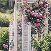 The Rose Arbor The Wauwinet Poster