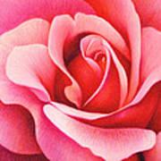 The Rose Poster by Natasha Denger