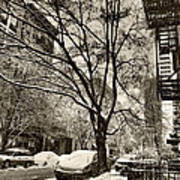 The Snow Tree - Sepia Antique Look Poster