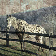 The Speckled Horse Poster