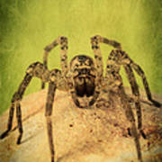 The Spider Series X Poster