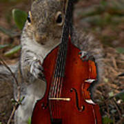 The Squirrel And His Double Bass Poster