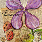 The Stages Of Money Plant Or Lunaria Poster
