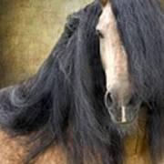 The Stallion Poster