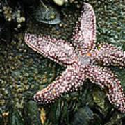 The Starfish  Poster