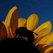 The Sunflower And The Bee Poster