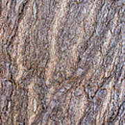 The Texture Of Wood Poster