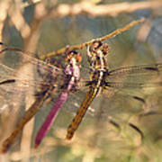 The Three Dragonflies  Poster