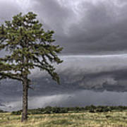 The Thunder Rolls - Storm - Pine Tree Poster by Jason Politte