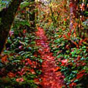 The Trail At Rainbow Falls Washington Poster