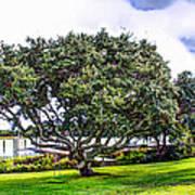 The Wedding Tree Poster