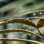 The Wet Of The Rain V2 Poster