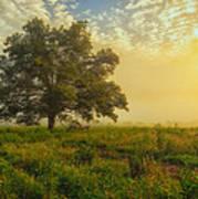 The White Oak Tree Poster