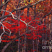 The Woods Aflame In Red Poster