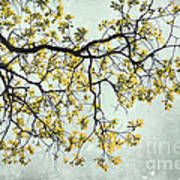 The Yellow Tree Poster by Sharon Coty