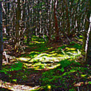 Thicket-like Woods And Spongy Moss Near Lobster Cove In Gros Mor Poster