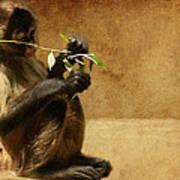 Thinking Monkey Poster