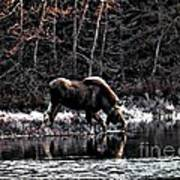 Thirsty Moose Impressionistic Digital Painting Poster