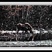 Thirsty Moose Impressionistic Painting With Borders Poster