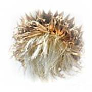 Thistle Abstract 14-1 Poster