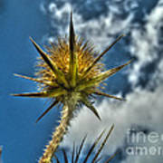 Thistle And Sky Poster