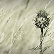 Thistle - Dreamers Garden Series Poster