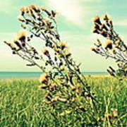 Thistle On The Beach  Poster