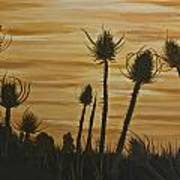 Thistles At Sunset Poster