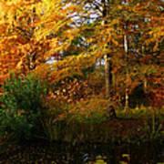 Thoreau's Splendour Poster