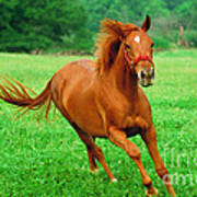 Thoroughbred Filly Poster