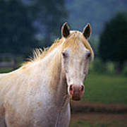 Thoroughbred Mare Poster