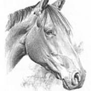 Thoroughbred Pencil Portrait Poster