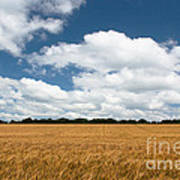 Thoughts Of A Wheatfield Poster