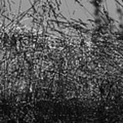 Thousands Of Shimmering Raindrops - Monochrome Poster
