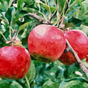 Three Apples On Tree Poster