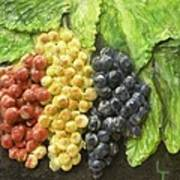 Three Colors Of Grapes Poster