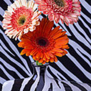 Three Daises In Striped Vase Poster