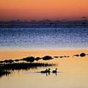 Three Ducks At Dawn Poster