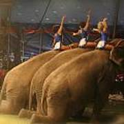 Three Elephants At The Circus Poster