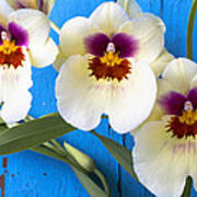 Three Exotic Orchids Poster