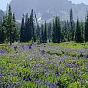105417-three Fingered Jack And Wildflowers Poster