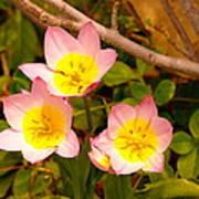 Three Flowers Poster