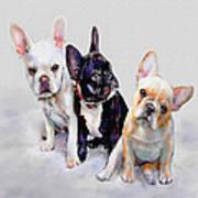 Three Frenchie Puppies Poster by Jane Schnetlage