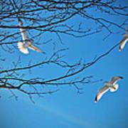 Three Gulls Poster
