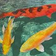 Three Mixed Koi Poster